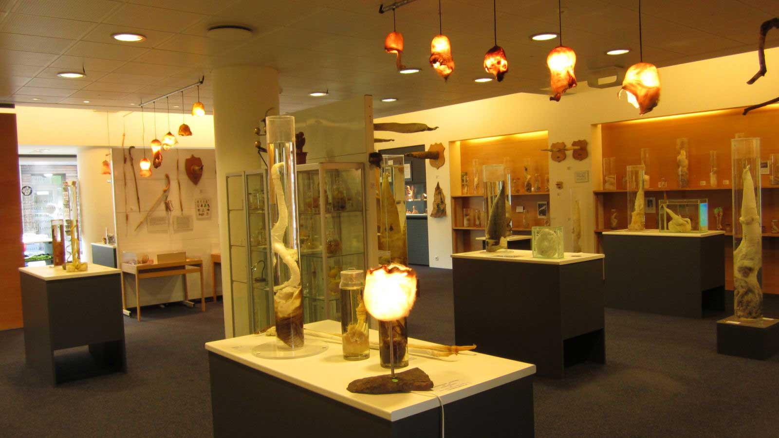 museum_fikladelfar