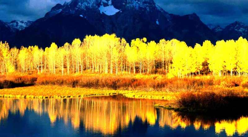 autumn_leaves_yellow_trees